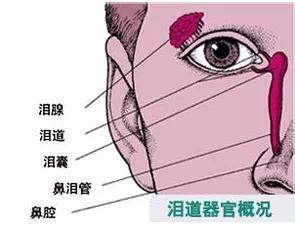 鼻腔示意图